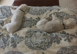 The doggies LOVED the extra rest days... :-)